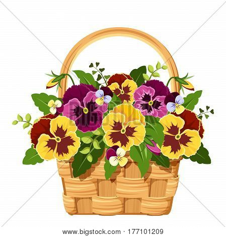 Vector illustration of a basket with yellow and purple pansy flowers isolated on a white background.