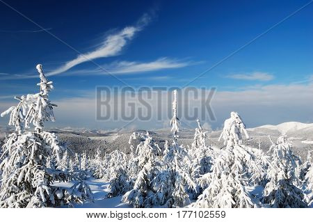 Image of beautiful winter day with snow-covered fir trees and mountain tops on background