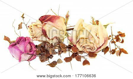 multicolor dry delicate flowers leaves and petals of pink rose on white background