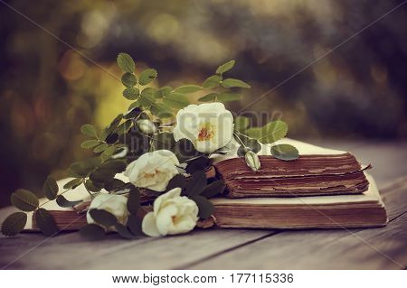 White dogrose and open old books on a wooden table