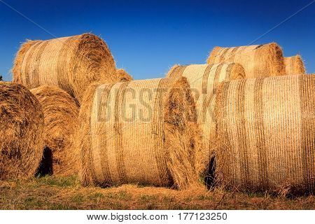 autumn landscape with haystack at the farm, location - Wellington, North Island, New Zealand