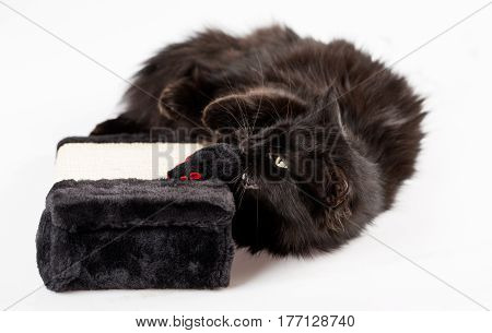 Adorable black cat playing with a mouse toy