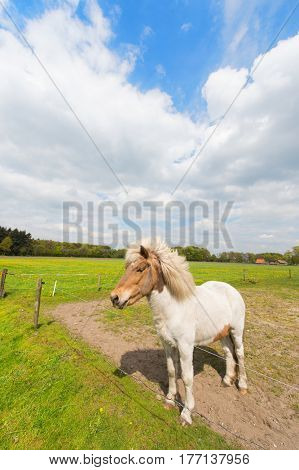 White horse in agriculture landschape standing in the meadows