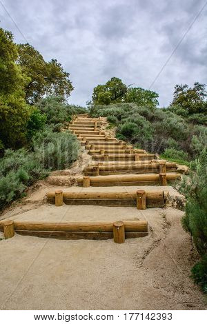 Wood Steps Path At Mountain With Green Plants
