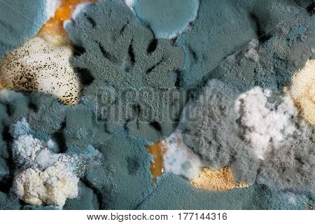 A macro photo of different mold fungi as background or texture.