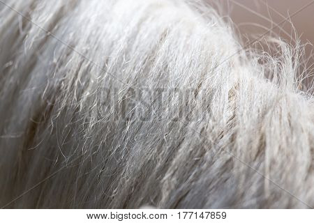 horse mane as background . Photo taken by professional camera and lens