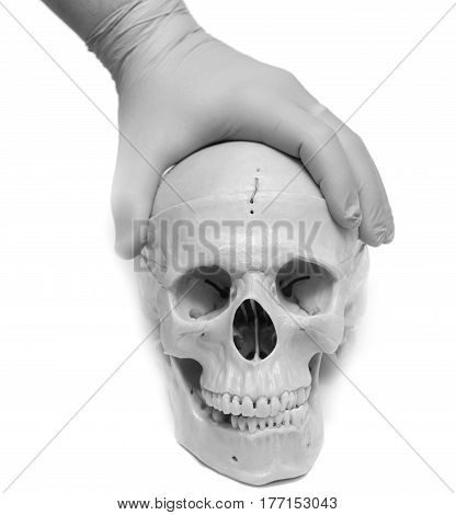 human skull on a white background . A photo