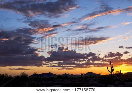 A beautiful sunset over the Sonoran Desert with a saguaro cactus in Phoenix Arizona.