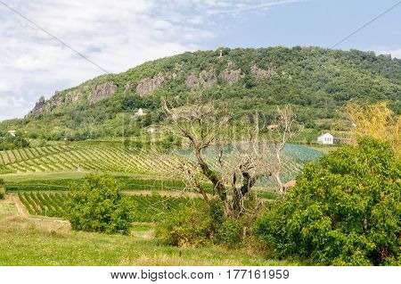 Stone cross on the basalt cone of Badacsony above small vineyards - Hungary