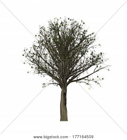 This is a Tree isolated on white background.