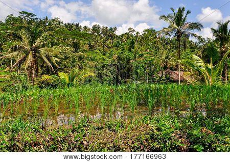 Tropical Landscape In Gunung Kawi, Bali, Indonesia