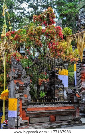 Colorful Tree In Tirta Empul Temple, Bali, Indonesia