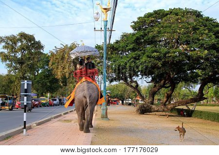 Travel to Ayutthaya, Thailand. The elephant and the dog on the walk.