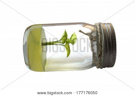 plant tissue culture on a white background. Blur Picture