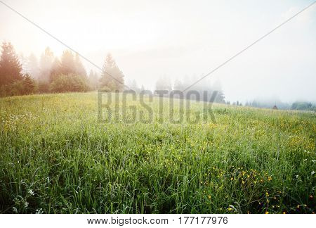 A look at the alpine valley in the morning light. Wonderful day and gorgeous scene. Location place Carpathian, scenic wealth of Ukraine, Europe. Perfect vacation outdoors. Explore the world's beauty.