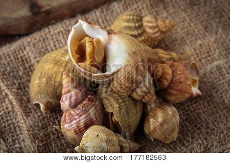 Raw Fresh Whelks