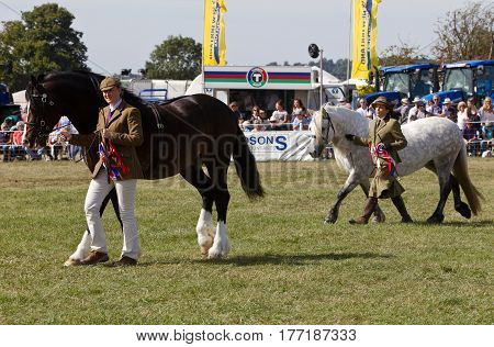 WEEDON, UK - SEPTEMBER 1: Handlers hold their horses steady for the judge to assess them during one of the many horse competitions at the Bucks County Show on September 1, 2016 in Weedon