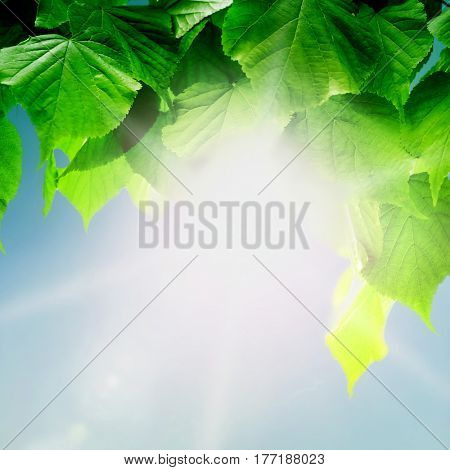 forest trees leaf. nature green wood sunlight backgrounds. Hello spring