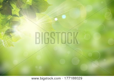 Fresh spring green field grass with green bokeh and sunlight backgrounds