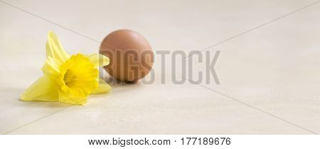 Easter card banner idea with yellow flower and natural egg