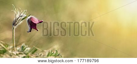 Website banner of a beautiful flower in Spring