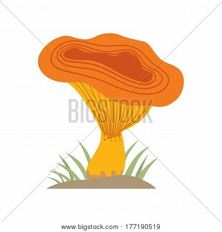 Poisonous orange mushroom nature food vegetarian healthy autumn edible and fungus organic vegetable raw ingredient vector illustration. Gourmet poison not eating drawing grow plant.