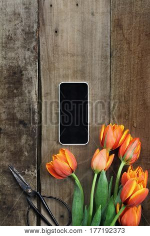 Overhead shot of a cell phone with a bouquet of orange and yellow tulips over a rustic wood table top with antique scissors. Flat lay overhead view style.