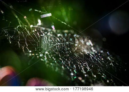 beauty design spider web spiderweb macro background