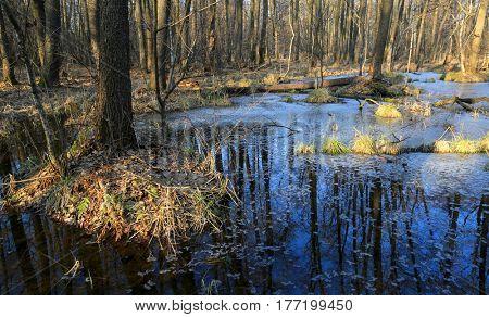 bog in deep forest in spring time