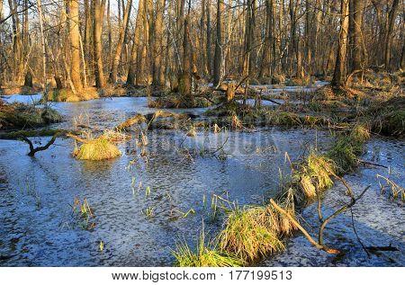 wild landscape with bog in spring forest