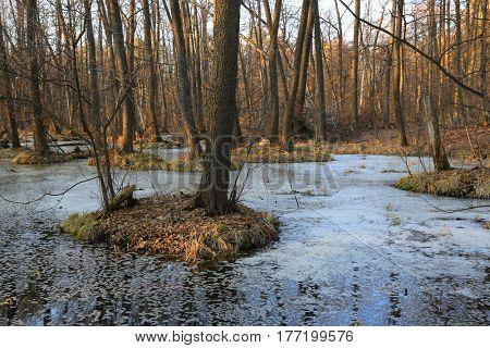 Spring landscape with bog in forest
