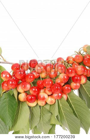 The branch of cherries with berries isolated on white background