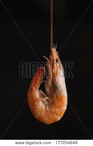 Shrimps On Black Background. Delicious Seafood Appetizer Served Boiled Or Grilled With Spices. Close