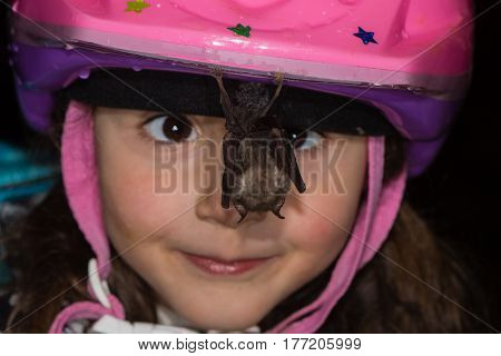 Cross-eyed child looking at bat hanging from helmet. Friendly lesser horseshoe bat resting on girls bike helmet in a cave in Somerset UK