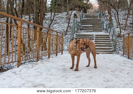 Miserable lost dog alone in park in winter