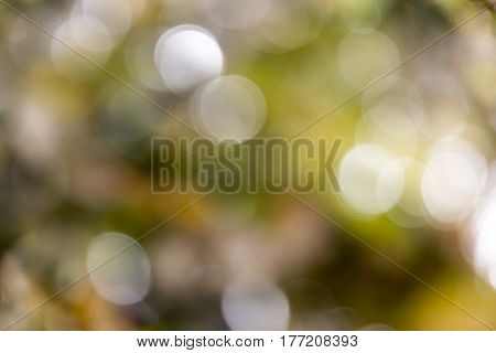 background bokeh fall . Photo taken by professional camera and lens