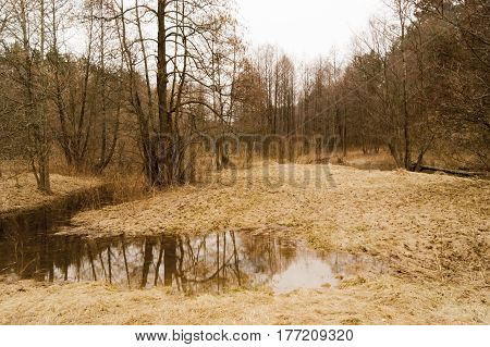 Spring landscape with meadow flooded with water from melted snow and rain in the foreground and trees in the middle ground on the background of cloudy sky