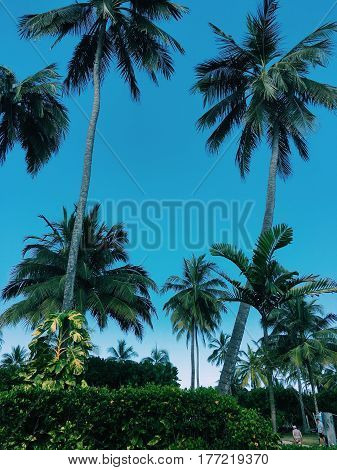 Asian landscape on blue sky background big palm trees