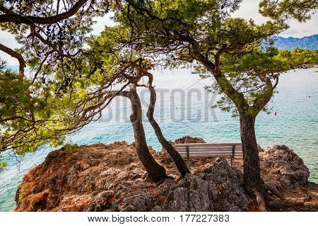 lonely bench under old pines in Brela, Makarska Riviera, Croatia