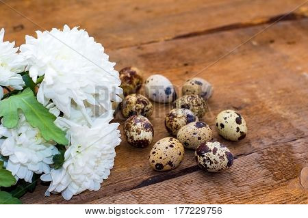 Chrysanthemum Flower And A Few Quail Eggs On Old Brown Wooden Background.