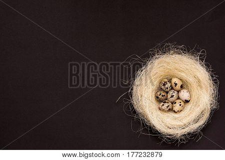 Few Quail Eggs In The Nest On Black Background.
