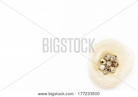 Few Quail Eggs In The Nest On A White Background.