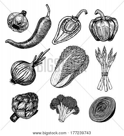 Set hand drawn elements with sketch style vegetables. Different peppers. Fresh cabbage. Artichoke and asparagus. Cauliflower, onions