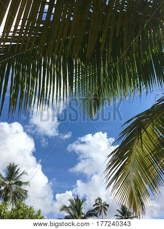 Image of large leaves of palm trees in a blue sunny sky
