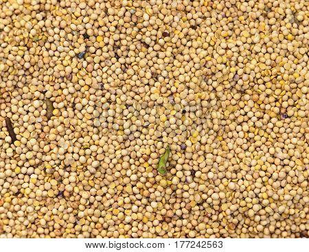 Freshly Harvested Soy Beans