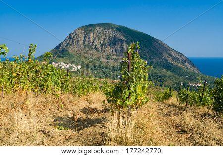 View from neglected vineyard on a Bear (Ayu-Dag) mountain near Gurzuf resort in Crimea Ukraine.