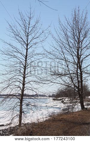 Trees along lake shore, bare of leaves during the winter season.