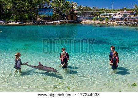 GOLD COAST, AUSTRALIA - MARCH 19, 2017 Dolphin in their enclosure at Seaworld interacting with people, Australia