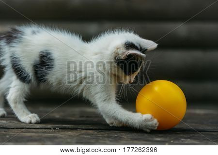Cute Kitten Cat Playing With Yellow Ball
