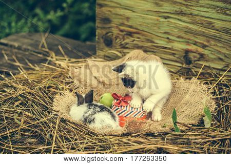 Cute Small Cat With Red Heart Gift Box And Rabbit